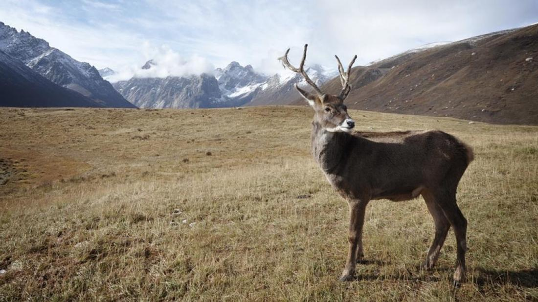 What do we lose when the caribou disappear?