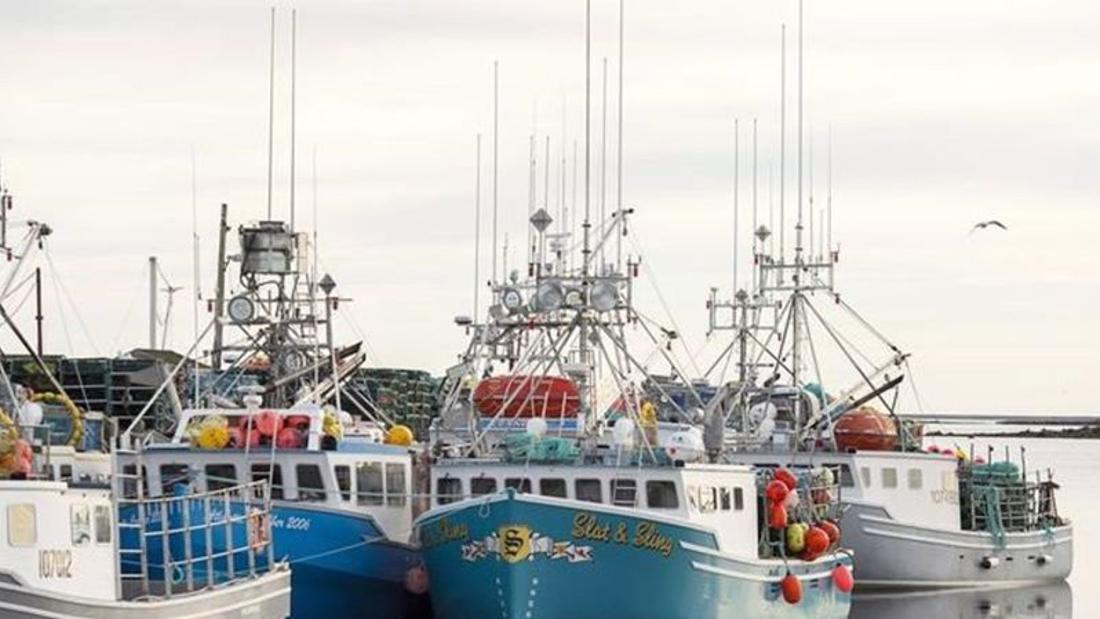 Conservation group says regulatory gaps in Canadian seafood supply chain pose threat