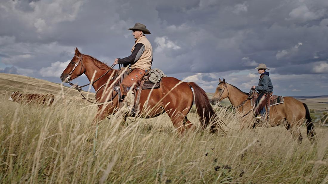 Threatened by Coal, Ranchers Take the Kenney Government to Court