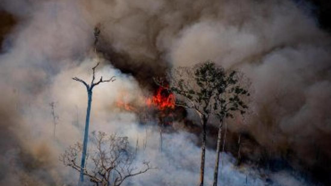 Feds urged to walk away from Brazil trade deal because of fires, climate concerns