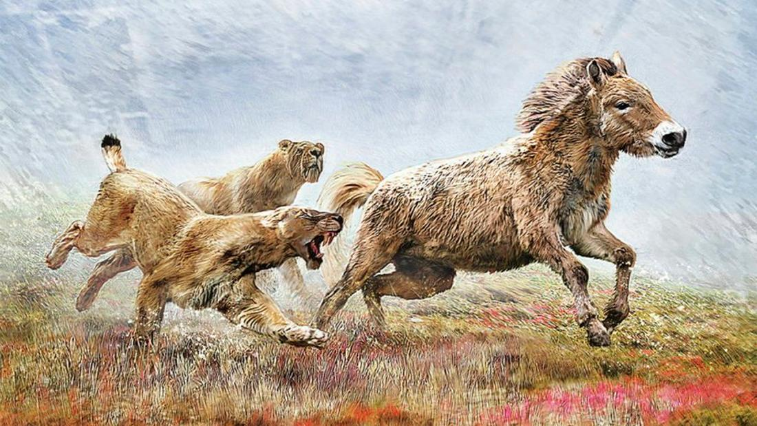 New DNA study suggests scimitar-toothed cats hunted in groups, chased prey to exhaustion