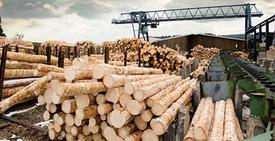 Canada has new ways to pressure Washington over softwood lumber duties: ambassador