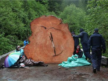 185 arrests so far at B.C. protests against old-growth logging: RCMP