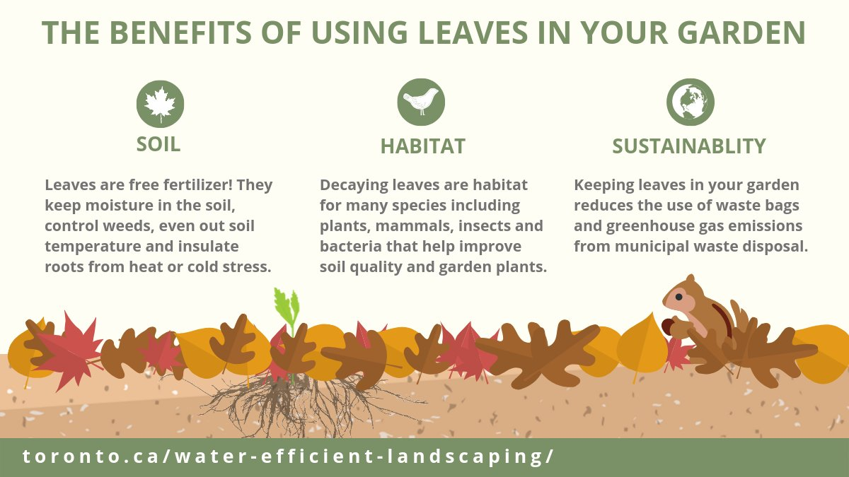 Diagram describes the benefits of using leaves in your garden including: soil, habitat and sustainability