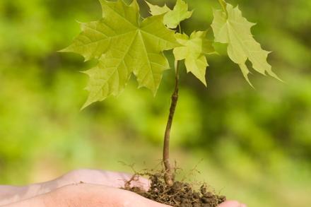 Tree Species List 2021