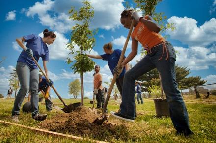 1 Million Trees Planted—and counting