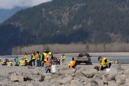 Several tonnes of garbage hauled in during Fraser River Cleanup in Chilliwack