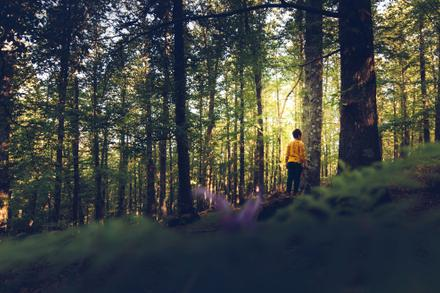 Backyard Species, Part 2: Trees