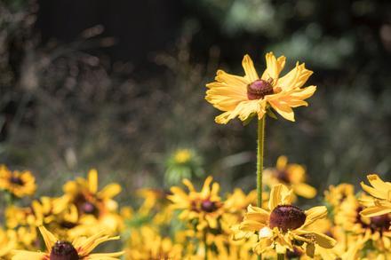 Backyard Species Part 3: Insect Pollinators