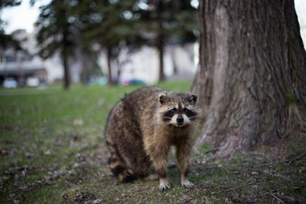 Backyard Species, Part 5: Terrestrial Mammals
